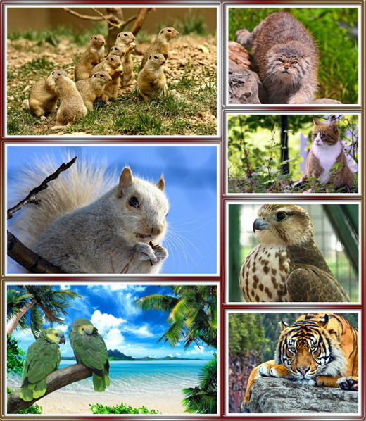 Source Url   Thumperdc   Forum Hd Pack Animals Wallpapers
